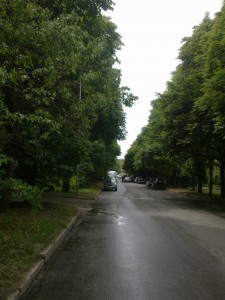 Каштановая аллея по ул. Дзержинского